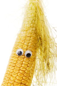 corn on cob with googly eyes gmo foods