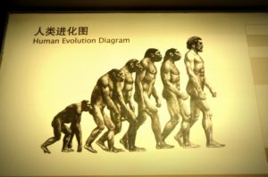 diagram of human evolution from monkey to man