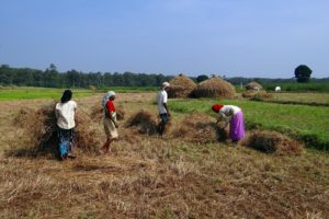 4 people working in rice paddy in india
